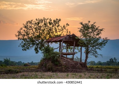 Wood cottage in the middle of paddy field and colorful sunset sky at  Loei, Thailand