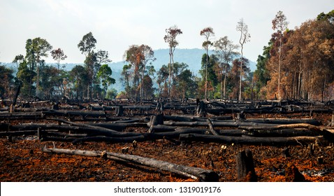 Wood cutting, burning wood, destroying the environment.Area of illegal deforestation of vegetation native to the Laos forest,ASIA.