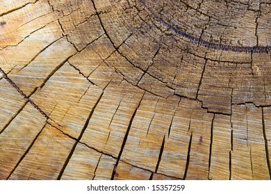 Wood end grain, Sawn log.