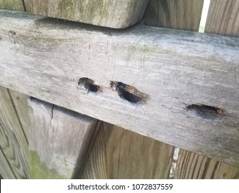 wood fence with carpenter bee holes or nests