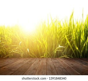Wood floor at paddy rice field in sunrise.