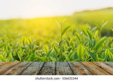 wood floor tea farm in the morning