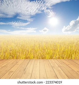 Wood floor Yellow rice field  and blue sky for background