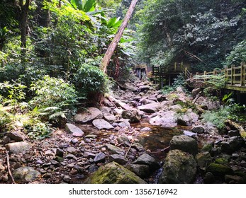 wood footway in Hainan Five Finger Mountain forest