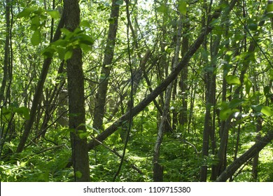 wood forest green nature background environment natural pattern