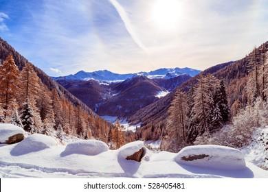 wood full of snow in the italian alps