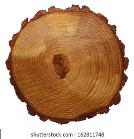 Wood Grain Tree Cross Section Isolated On White Background.