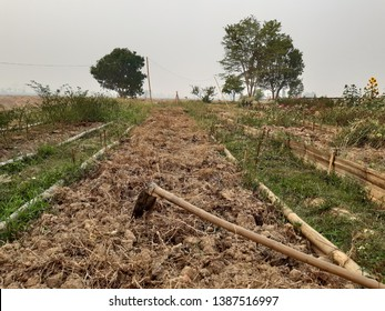 the wood handle field and garden hoe in the farm
