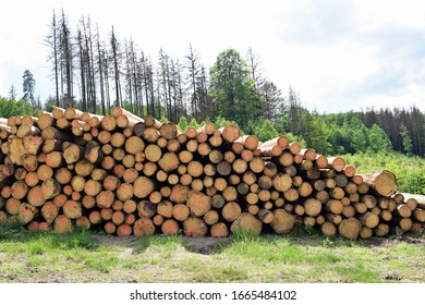 Wood harvested during bark beetle calamity in South Bohemia, Czech Republic