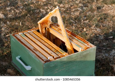 Wood hive destroyed by time. Hive abandoned with dead bees.