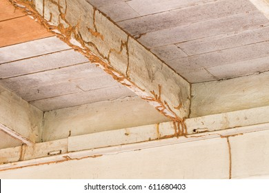The wood home with termites damage