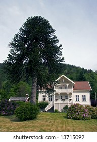 wood house with a tree