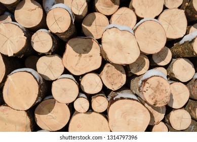 Wood logs in a stack. Cut trees in the stack. Many sawed trees. Warehouse wood. Logs