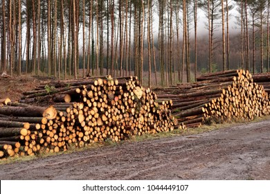 Wood logs stacked chopped in forest for biomass fuel save environment plant