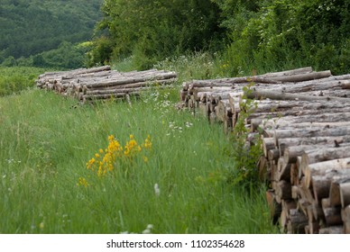 Wood logs stacked on summer forest meadow