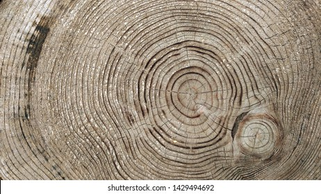 Wood logs texture background of aged annual rings
