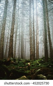 Wood with moss covered stones in fog