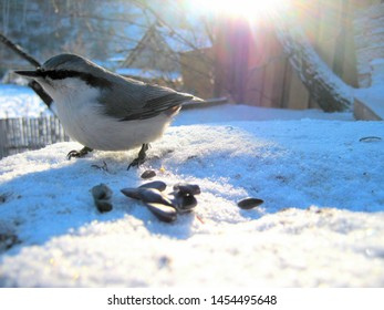 A wood nuthatch on a snow-covered stump with sunflower seeds.