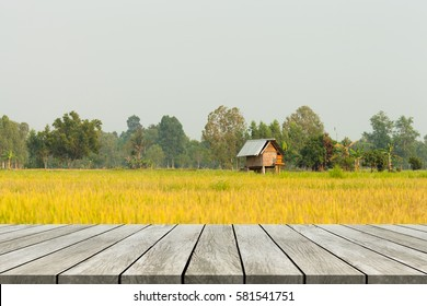 Wood old table against yellow rice plant background. For your product placement or montage with focus to the table top in the foreground. Old cottage small in cornfield