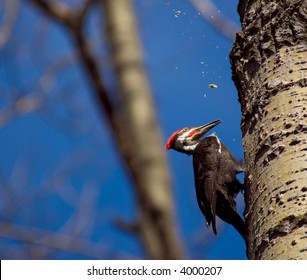 a wood pecker in a tree building a nest