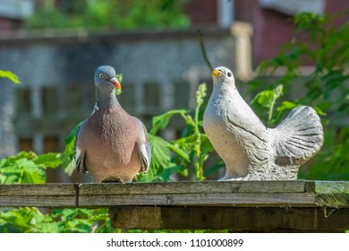 Royalty Free Wood-pigeon Images, Stock Photos & Vectors | Shutterstock
