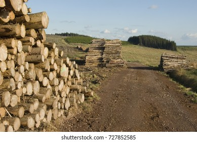 Wood piles in the woodland on Peat Law, in the Northumberland National Park