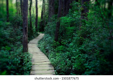 Wood plank path through the deep forest.