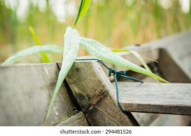 wood + plant
