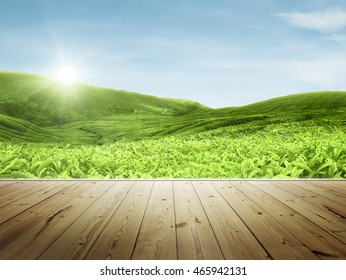 Wood platform beside tea plantation in morning view