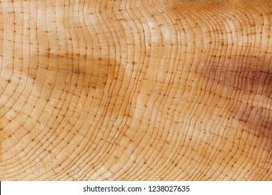 The wood ring texture background , close up.