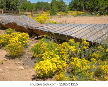 Wood and rock section of mountain bike track with bright yellow Fall wildflowers in foreground. Photo shot along La Tierra trail in mountain bike park, Santa Fe, NM September 2016.