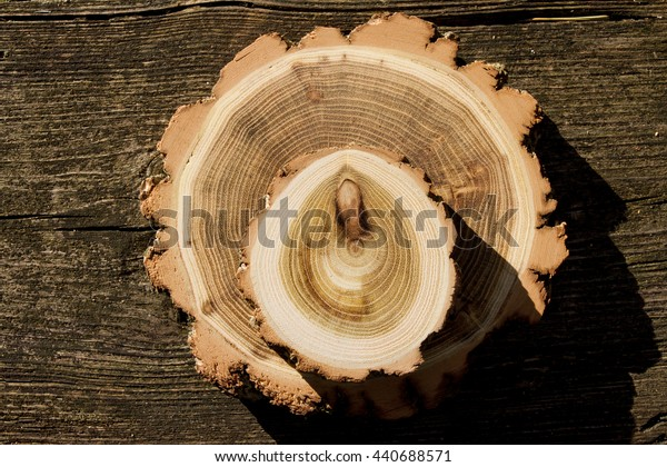 wood sections