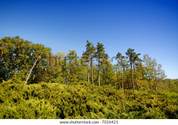 wood and separate pine trees on  background of  blue sky