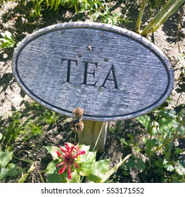 Wood sign with engraved lettering marking tea plant growing in a flower garden