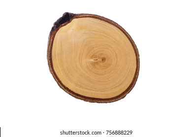 Wood Slice  Cross Section Cut  Tree round Rings Brown beige Stump Isolated on White background Showing Age and Years