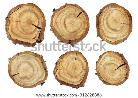 wood slice texture set slices wood の写真素材 今すぐ編集