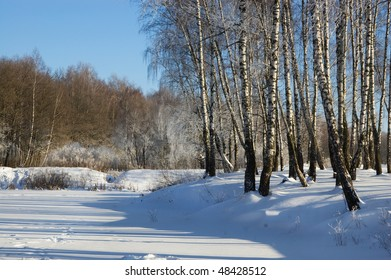 Wood in solar winter day