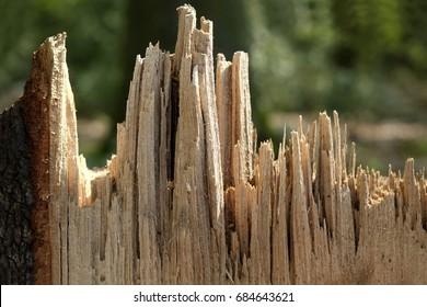 Wood splinter