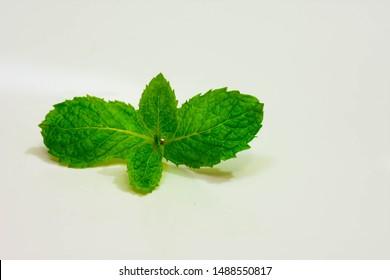 Imágenes, fotos de stock y vectores sobre Peppermint On