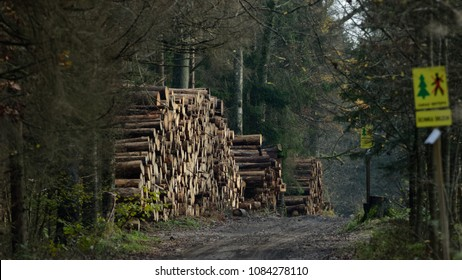 Wood stack by ground road within Bialowieza Forest, Poland,Europe