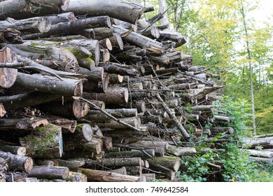 wood stack in forest for timber lumber woodpile
