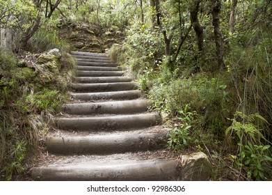 Wood stairs in the forest