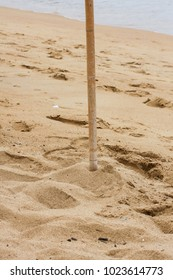 Wood stick stuck in sand near sea shore