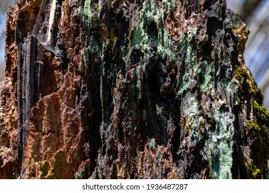 Wood structures of a rotten tree trunk in Duessel valley Germany. Macro close up of brownish wooden details with lichen, moss, fibres and splinters in warm sunlight. Colorful natural background.