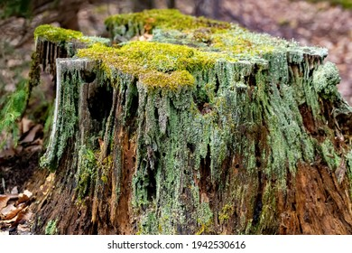 Wood structures of a rotten tree trunk  with cut section in Sauerland. Macro close up of brownish wooden details with lichen, moss, fibres and splinters in warm sunlight. Colorful natural background.