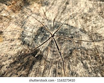 Legno Bianco Texture : Lavagna da parete in legno bianco decapato con cassetti e ganci cm