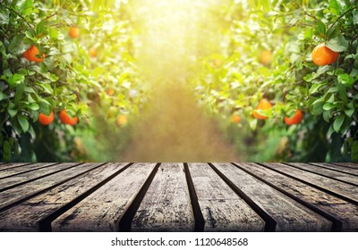 Wood Table with Blur Orange Garden Background in the Morning with Copy Space for Display Product or Montage Design