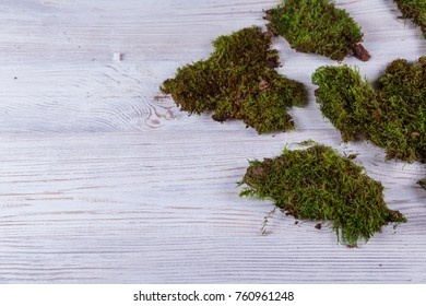 wood table and moss and stones on white background .
