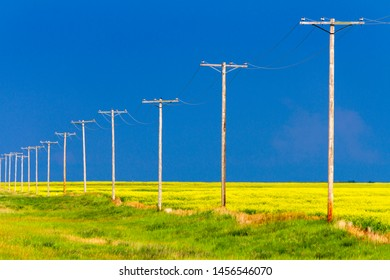 Wood telephone poles in a row in a yellow canola field in the Canadian Prairies.