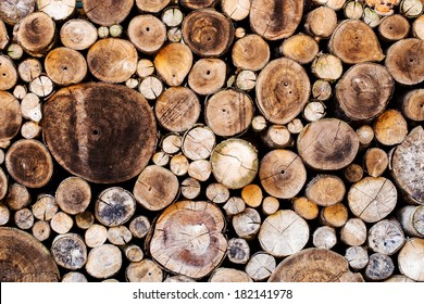 Wood texture background have many logs that cut from big tree and small tree